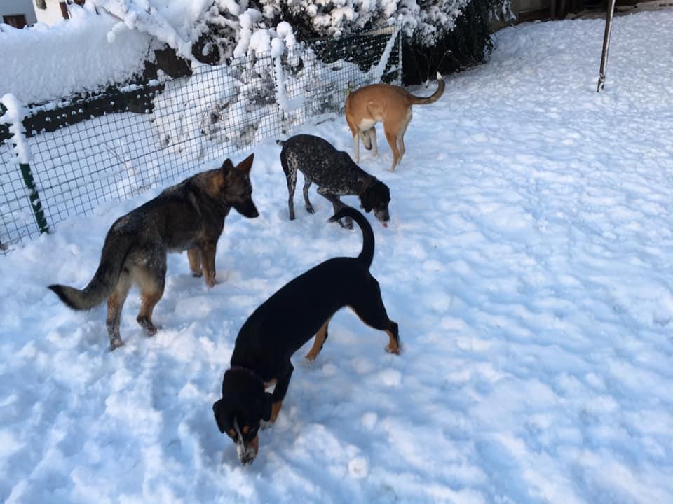 Holidaydogs 3